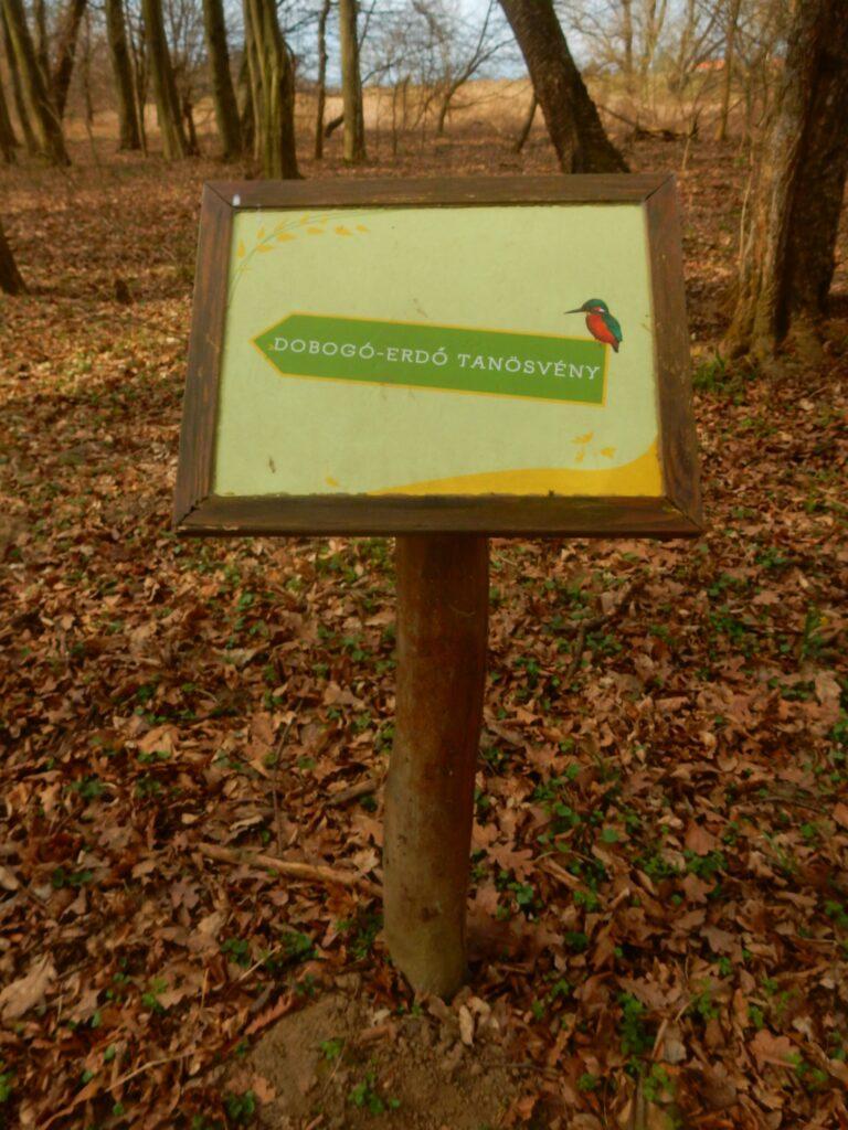 Lehrpfad Dobogóerdő (Märzenbecher)